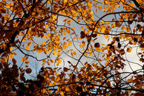 A tangle of fall leaves von Intensivelight Panorama-Edition