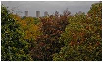 Kew-garden-view-1-of-1-2