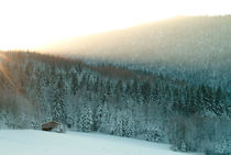 The cabin in the forest von Intensivelight Panorama-Edition