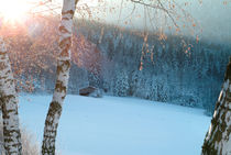 Small hut in a wintry forest by Intensivelight Panorama-Edition