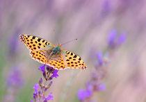 Butterfly  by Violetta Honkisz