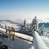 Winter Joy von Vesna Šajn