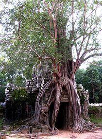 Türbaum von reisemonster
