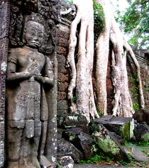 Ta Prohm, Cambodia, Angkor Wat by reisemonster