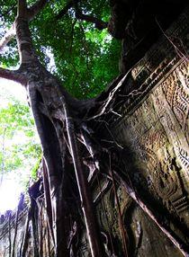 Baumwart, Cambodia, Angkor Wat by reisemonster