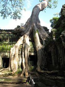 UrBaum, Cambodia, Angkor Wat von reisemonster