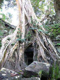 Baumtür, Cambodia, Angkor Wat von reisemonster