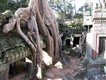 Preah Khan - Angkor Wat, Cambodia by reisemonster