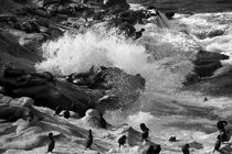 seal rock by dayle ann  clavin