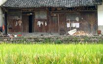 Hütte im Reis by reisemonster