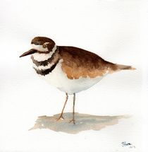 Kildeer by Sandy McDermott