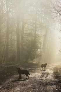 Misty Woodland Walk von David Tinsley