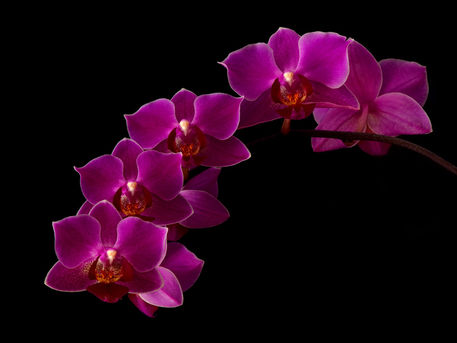 Orchidee-05-mehrraum
