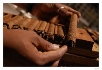 Cuban cigar by Diana Canzano