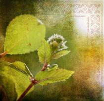 Dem Licht entgegen by Silvia Streit