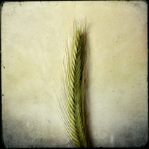 Herbaliser No. 18 by Daniela Weber