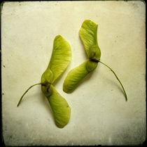 Herbaliser No. 4 by Daniela Weber