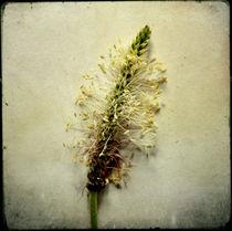 Herbaliser No. 14 von Daniela Weber