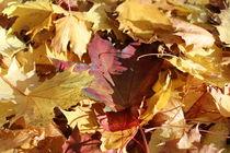 Herbstlaub_bunt von taxanin