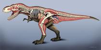 T-Rex anatomy von Fernando Ferreiro