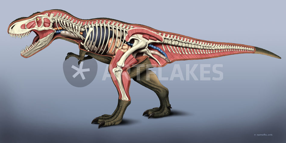 T Rex Anatomy Graphicillustration Art Prints And Posters By