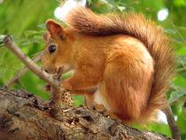 Squirrel Breakfast von Maria Bozina