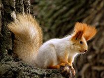 New Squirrel Season by Maria Bozina