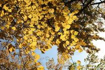 Laub_gold2 by taxanin