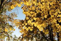 Laub_gold1 by taxanin