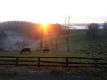 Cows-at-sunrise-by-bombadere-d5ok3v6