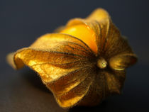 Physallisliegendpe