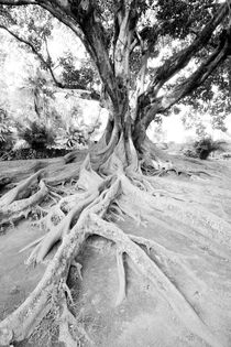 Roots by Andras Neiser
