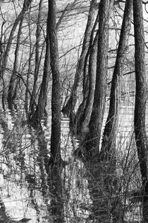 Reflections of trees von Andras Neiser