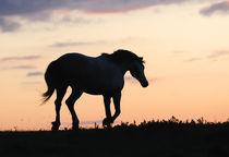 Horse silouette von Tamara Didenko