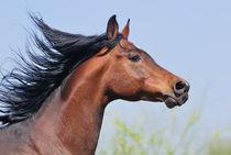 Horse portrait von Tamara Didenko