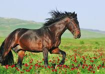 Horse running von Tamara Didenko
