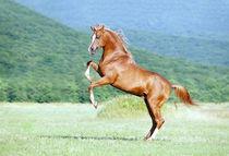 Horse rearing by Tamara Didenko