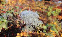 Blüte_Herbst von taxanin
