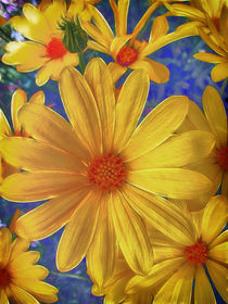 Daisy Delight by Fiona Messenger