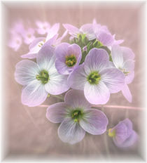 Wild Flowers von Fiona Messenger