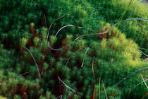 Tangle of mosses by Intensivelight Panorama-Edition