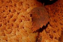 Brown birch leaf von Intensivelight Panorama-Edition