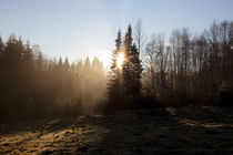 Morning mist by Intensivelight Panorama-Edition