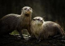 P-Ottering About von Fiona Messenger