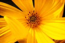 Yellow Beauty von Milena Ilieva
