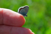 Butterfly on the finger von Intensivelight Panorama-Edition