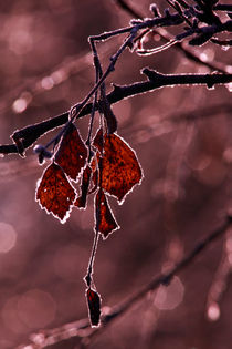Red birch leaves-monochrome von Intensivelight Panorama-Edition