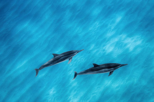 Dolphins-041507-084