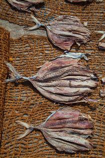 Trockenfisch in der Sonne von Gina Koch