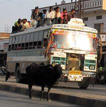 Bus und Kuh von reisemonster